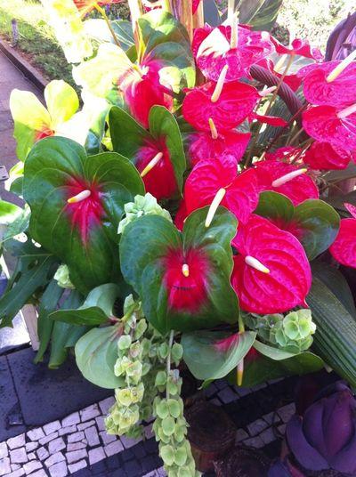 Flower Festival Madeira