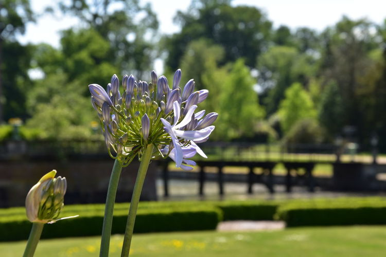 Beautiful flower on a sunny day Beauty In Nature Close-up Day Flower Flower Head Flowering Plant Focus On Foreground Fragility Freshness Green Color Growth Inflorescence Nature No People Outdoors Park Park - Man Made Space Petal Plant Purple Vulnerability  White Color