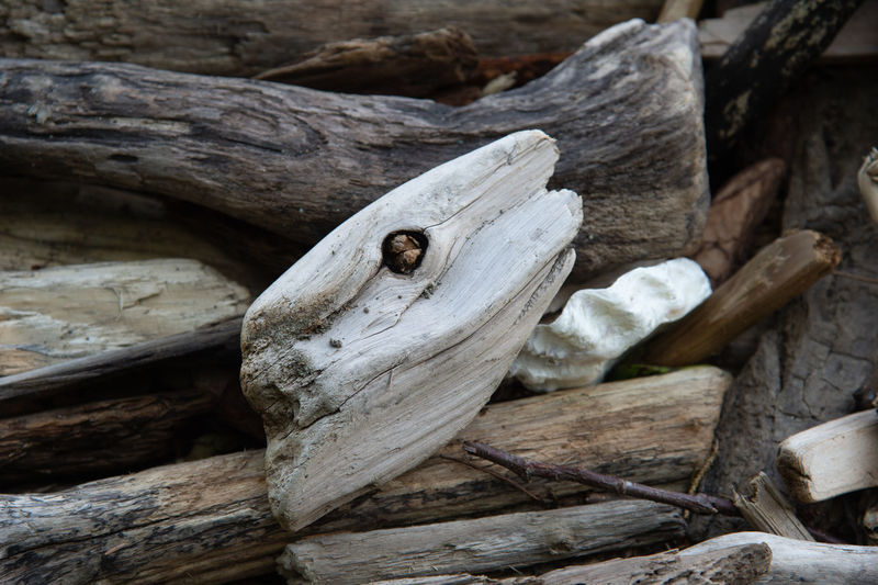 High angle view of driftwood on wood