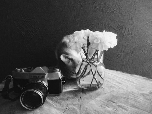 Digital Digital Photo Digital Photography