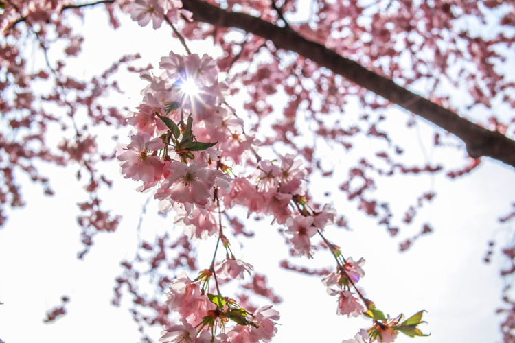 Spring season Springtime EyeEmBestPics EyeEm Best Shots EyeEm Selects Photography Nature Flower Head Tree Flower Branch Springtime Pink Color Petal Blossom Plum Blossom Beauty Flower Tree