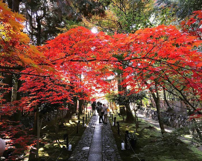 鹿王院 嵐山 京都 Kyoto 紅葉 Travel Destinations Kyoto Autumn Autumn Kyototrip Autumn Leaves Autumn Colors Hello World Enjoying Life Relaxing Kyoto, Japan Japanese Garden