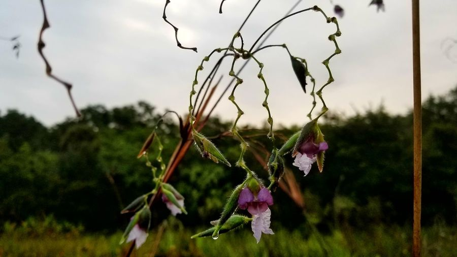 Nature Outdoors No People Plant Growth Day Flower Beauty In Nature Sky Close-up Swamp Orchid