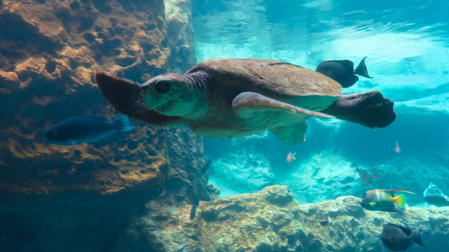 Hello World Turtle Seaturtle Animal Love Animal Photography Animals Seaworld Seaworldorlando Sea Turtle Sea Turtle Swimming Waving Hi! Sea Turtle :)