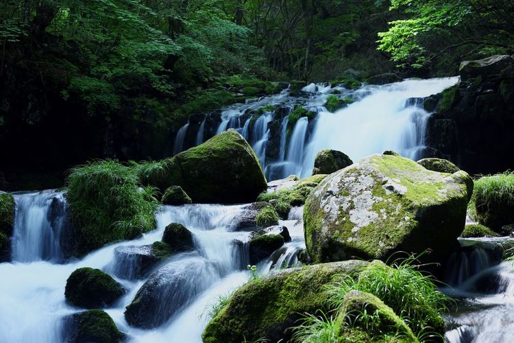 Waterfall Scenics Nature Beauty In Nature Tranquility Water Idyllic Flowing Water Motion Tranquil Scene Landscape Rock - Object Tree Environment Long Exposure Beauty Travel Destinations Forest No People Vacations 蓼科大滝 Stream - Flowing Water in Chino, Nagano , Japan Blurred Motion Rainforest