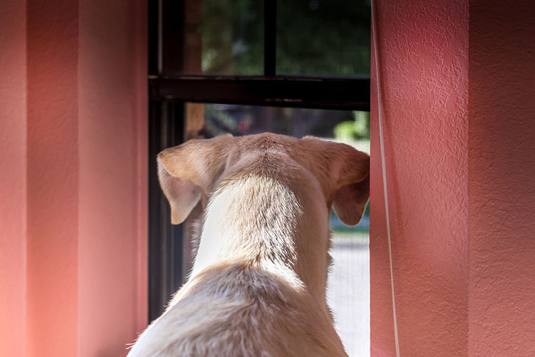 What's going on outside on the street, dog looking out of a window