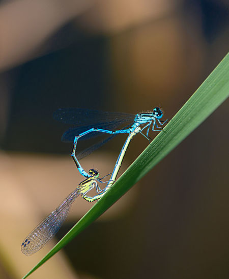 Animal Themes Animal Wildlife Animals In The Wild Close-up Damselfly Day Dragonflies Mate Fragility Indoors  Insect Latvia Leaf Meadow Nature No People One Animal Spider Spider Web Summer Sunny Day Web EyeEmNewHere