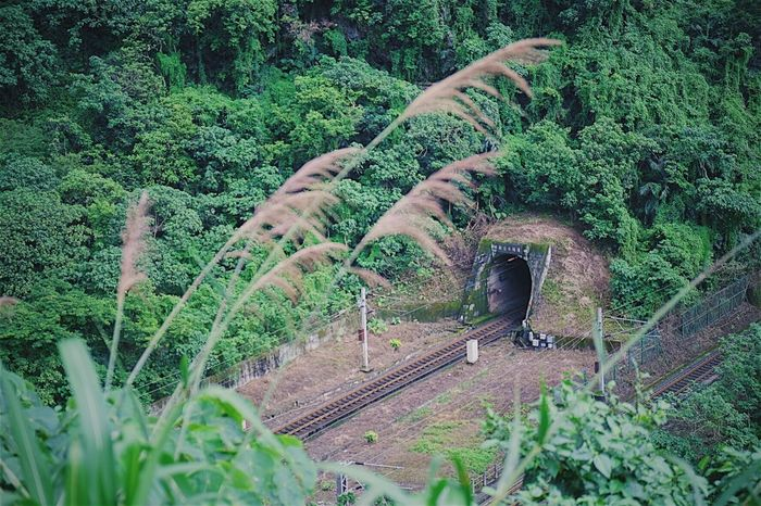 Hualien Green Color Nature Tree Railroad Track Beauty In Nature Outdoors No People Scenics