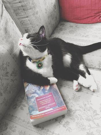 Domestic Cat Pets Domestic Animals Feline Mammal One Animal Looking At Camera Animal Themes Indoors  Cat Full Length No People Portrait Reading Day Some light reading... 😼📚