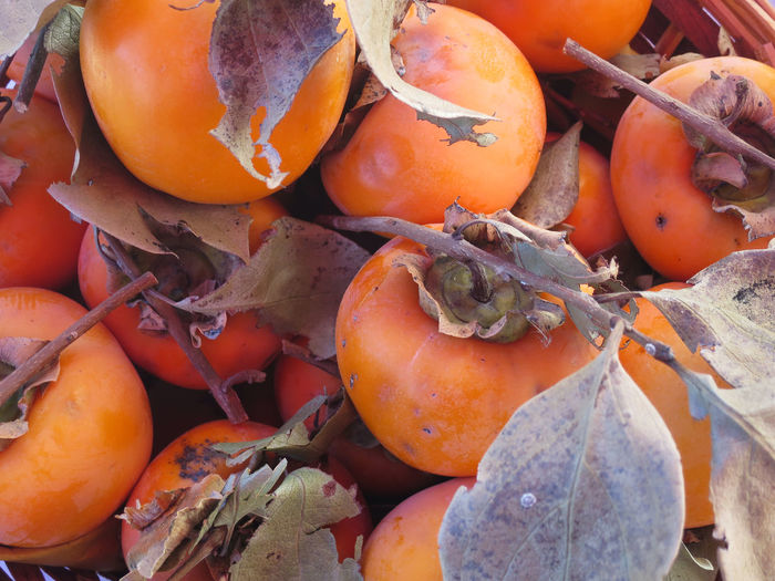 autumnal kaki fruit seasonal fruit on basket Backgrounds Close-up Day Food Food And Drink Freshness Fruit Fruits, Fruit, Season, Autumn, Ripe, Persimmon, Persimmon, Harvest, Basket, Sale, Grocer, Greengrocer, Calories, Vitamin, Basket, Color,, Matured, Tender, Delicate, Fleshy Pulp, Variety, Quality, Full Frame Healthy Eating Market Nature No People Orange Color Outdoors Pumpkin Raw Food Retail  Rotten Rotting Vegetable