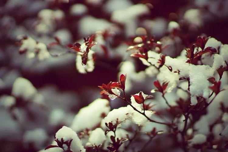 아침 봄 상쾌하게 봄이 느껴지는 아침.