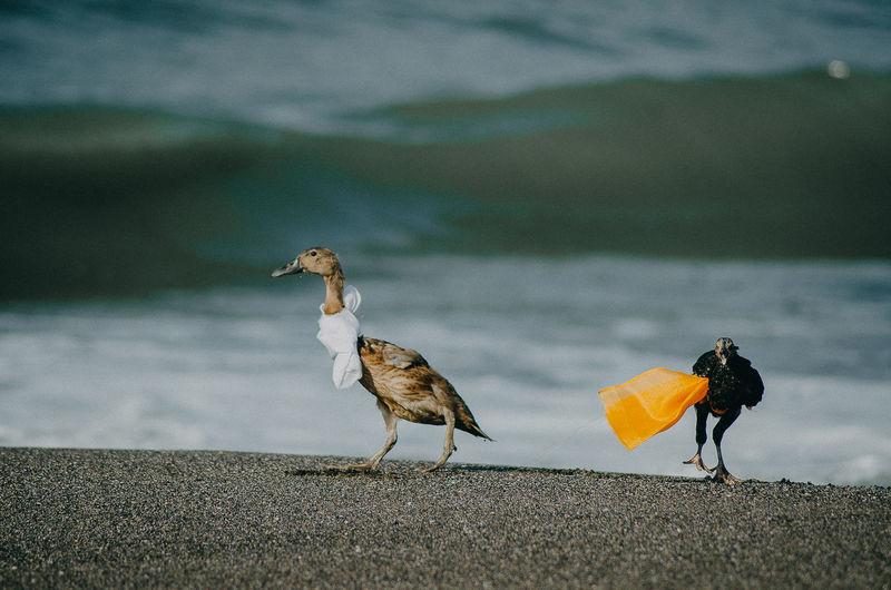 Birds at shore of beach