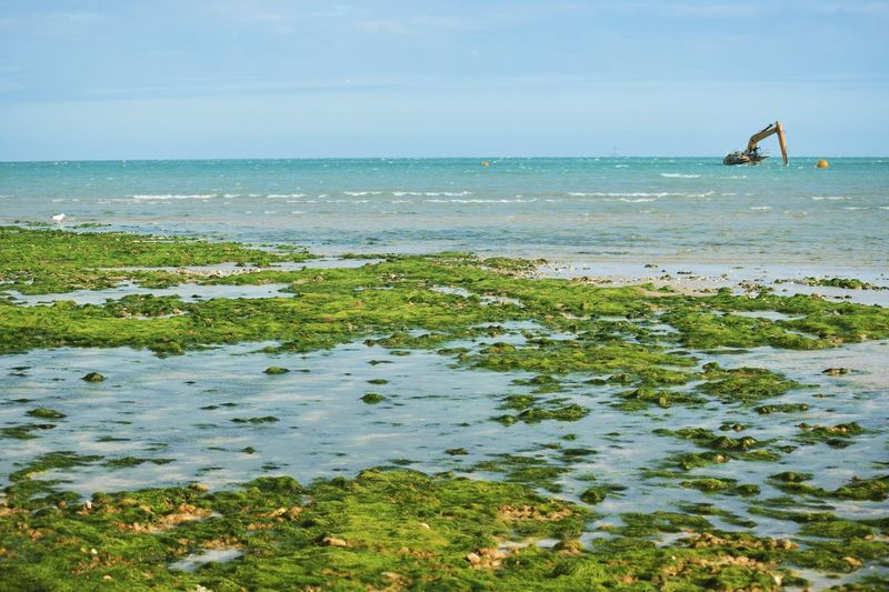 Moby Dig stuck in the sea Sea Beach Horizon Over Water Sand Outdoors Nature Summer Sky Worthing Lancing  Stuck Seaweed Rock Pool Mobydick