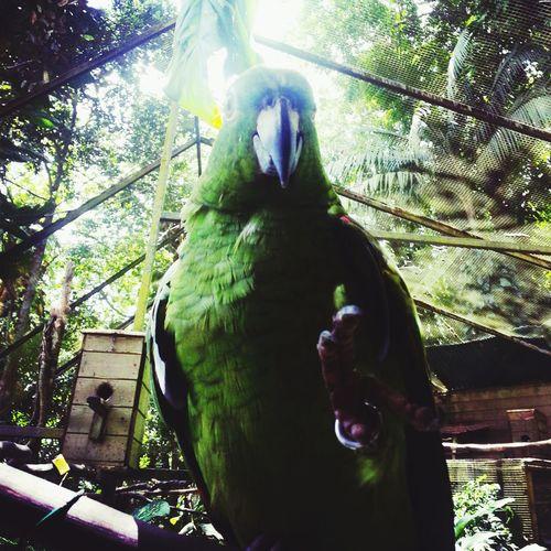 This parrot look like god no ? Taking Photos Hello World Enjoying Life Walking