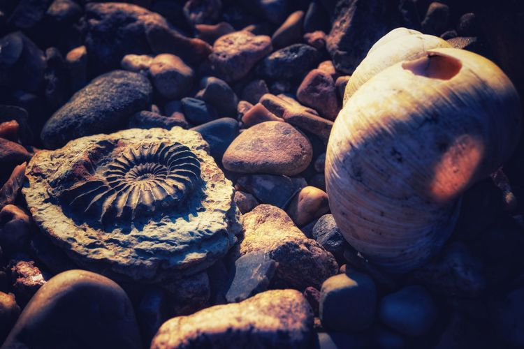 Fossil stone