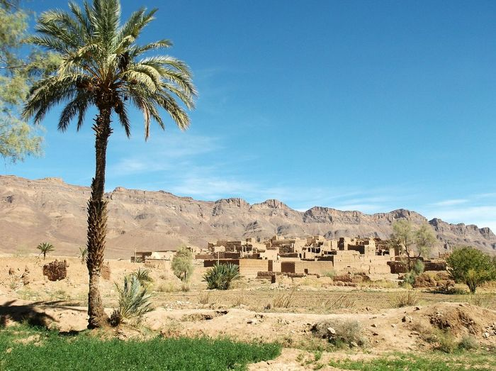 Morocco Tamnougalt Village Palm Trees Desert Mountain Mobile Photography
