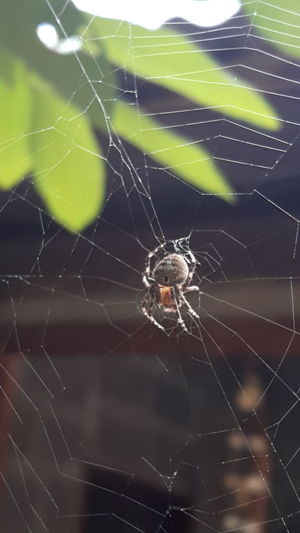 Animal Leg Web Complexity Full Length Insect Spider Web Spider Survival Intricacy Close-up