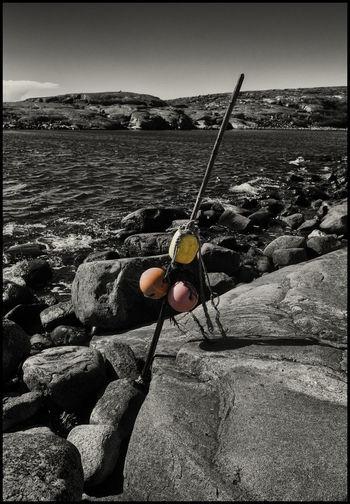 Taking Photos Enjoying Life Sverige X-T1 FUJIFILM X-T1 Colorsplash Fujifilm X-Shooter Svensk Natur EyeEm Nature Lover