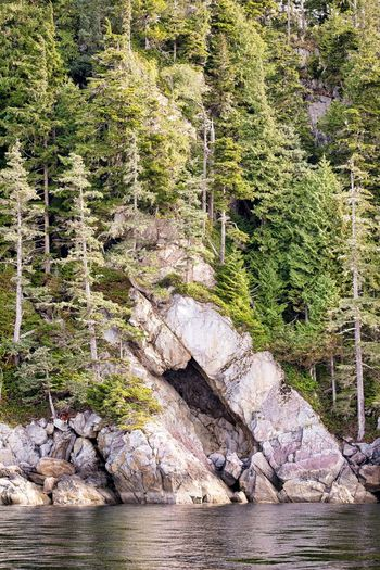 Granite cliffs going into the sea Beauty In Nature Coniferous Tree Day Environment Forest Land Landscape Nature No People Non-urban Scene Outdoors Pine Tree Pine Woodland Plant Rock Rock - Object Scenics - Nature Solid Tranquil Scene Tranquility Tree Water