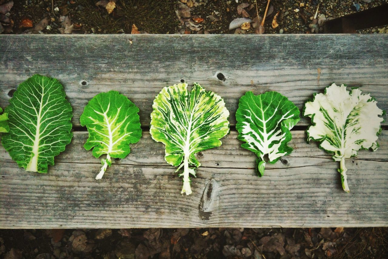 High Angle View Of Leaf Vegetables Arranged On Wooden Table