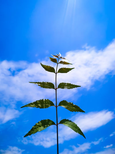 Low angle view of plant leaves against blue sky