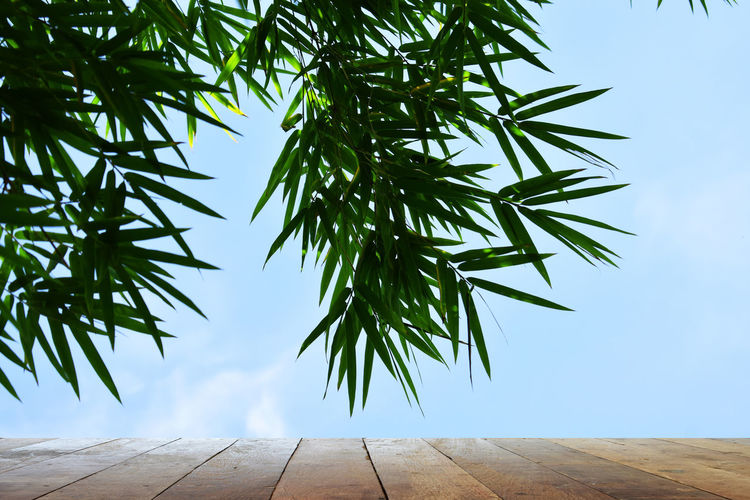 Plant Tree Sky