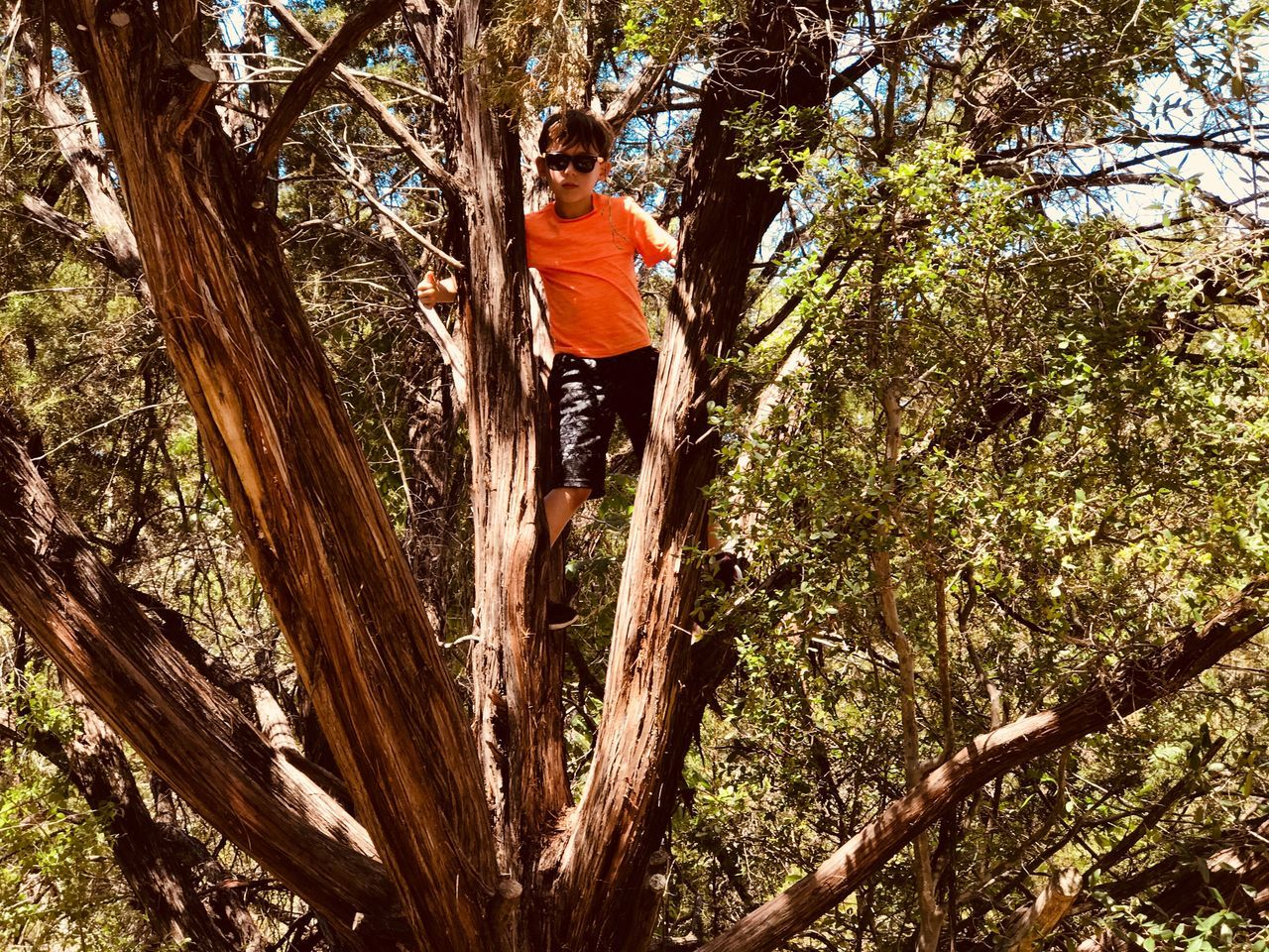 tree, one person, full length, adventure, leisure activity, climbing, tree trunk, low angle view, casual clothing, outdoors, nature, day, real people, branch, young men, growth, young adult, men, hanging, risk, lifestyles, one man only, rope swing, beauty in nature, adult, only men, adults only, people