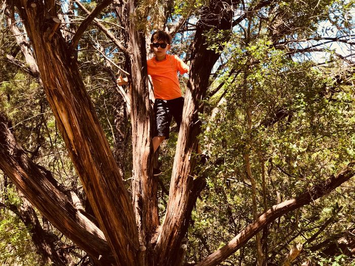 Summer Sunglasses Fun Playing Tree Climbing Childhood Child Boy Tree Climbing Adventure Tree Trunk One Person RISK Nature Outdoors Branch