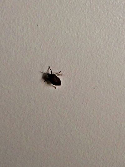 I hate these little assholes. Stinkbug Insects  Nature Get Out Of My Apartment