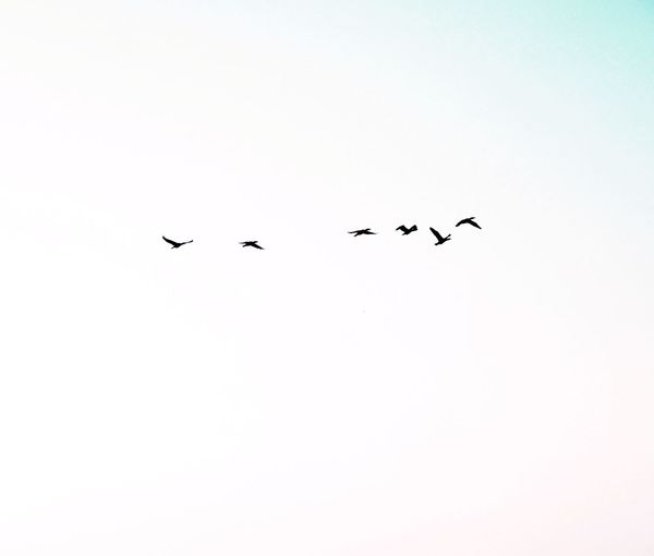 Birds are dancing for you 🌈 Calm Mindfulness Scenics - Nature EyeEm Nature Lover EyeEm Best Shots - Nature Atmospheric Mood Idyllic Formation Freshness VSCO Rural Scene Landscape Clear Sky Morning Light Bird Flock Of Birds Flying Skyporn Winter Cold Temperature Full Frame Togetherness Taking Photos Animal Themes Animals In The Wild Minimalism Abstract Countryside Still Life Tranquil Scene