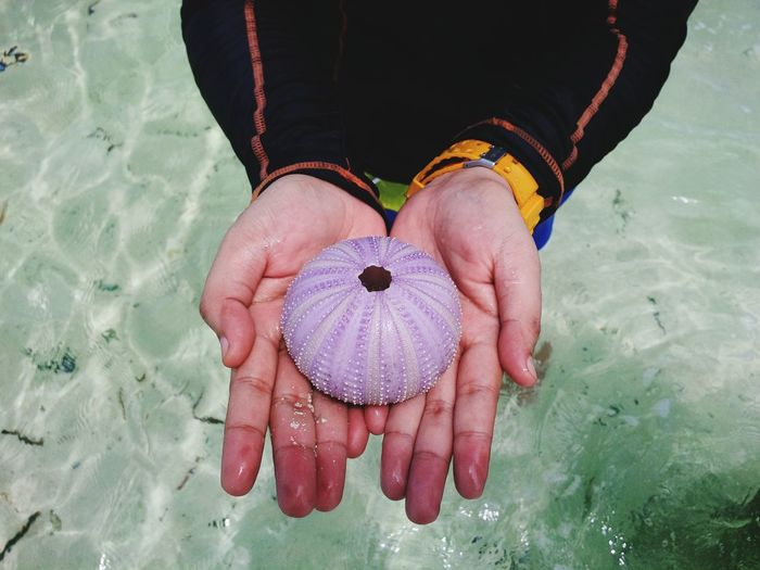 Midsection of person holding sea urchin in water