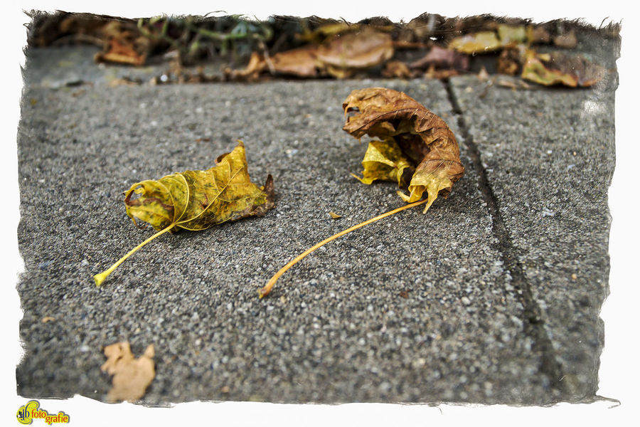 Autumn Day Herbstimpressionen Leaf Nature No People Outdoors Streetphotography