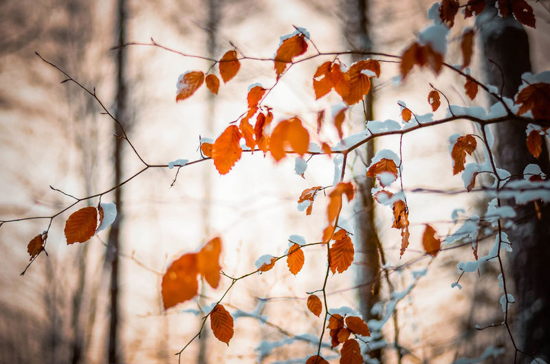 Autumn Plant Focus On Foreground Orange Color Change Beauty In Nature No People Nature Branch Day Growth Plant Part Leaf Dry Tree Fruit Food Outdoors Leaves Autumn Collection Close-up Poland Poland Eyeem Kaszuby Bokeh