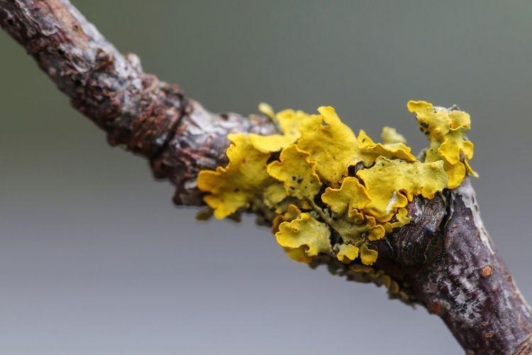 Lichens on branch