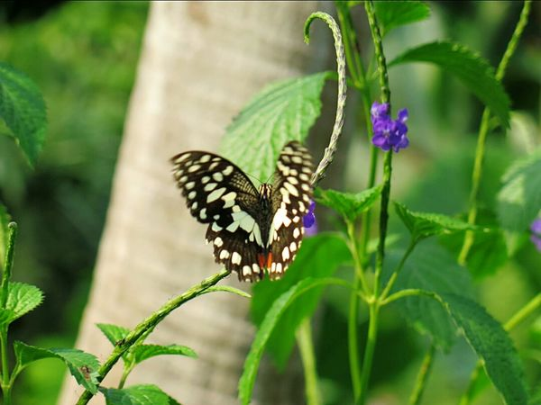 Butterfly Butterfly And Flowers Beautiful Nature Naturelover Insect Tropical House Tropical Paradise Nature Photography
