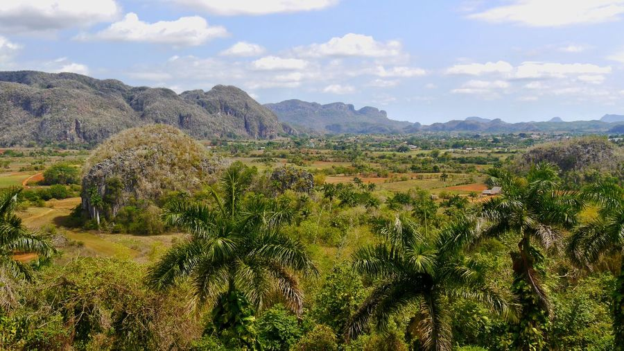 amazing view to world heritage of Cuba, Viñales valley with Mogotes mountain range amazing nature Landscapes With WhiteWa Cuba Collection Amazing Nature Landscapes Viñales Valley, Cuba Tobacco Field Mountain Range Mogotes Viñales Cuba Wide View World Heritage Pure Nature, Amazing EyeEm Nature Lover EyeEm Gallery EyeEm Selects Travel Travel Destinations Rural Scene Agriculture Fruit Wine Field Crop  Sky Cloud - Sky Landscape Plantation Cultivated Land Terraced Field Agricultural Field Patchwork Landscape The Great Outdoors - 2018 EyeEm Awards