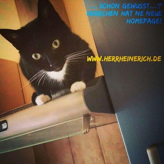 Schon gewusst ...? Herrchen hat ne neue Homepage! www.herrheinerich.de Blogs Podcast Homepage Cats
