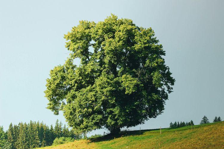 Landscape Nature Tree