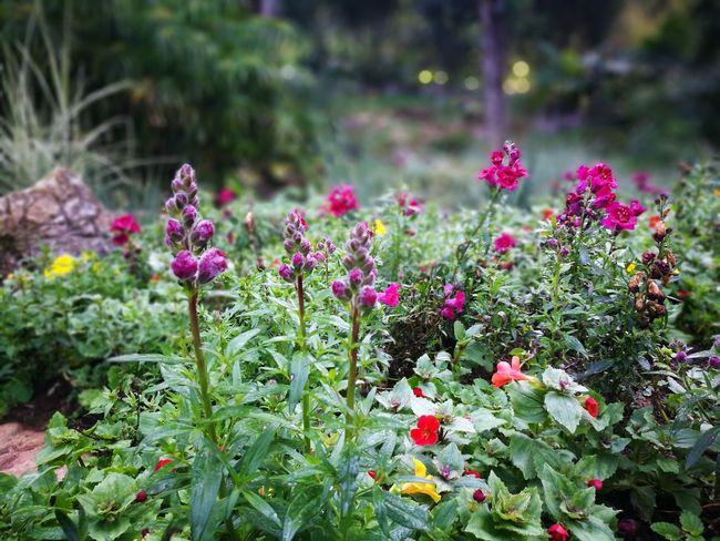 Chiang Mai | Thailand DoiAngKhang,Fang,ChiangMai Flawer🌸 Green Color Natereza Natural Beauty Nature Thailand