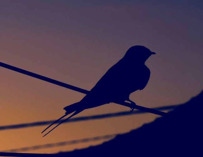 Close-up of silhouette bird perching on pole against sky