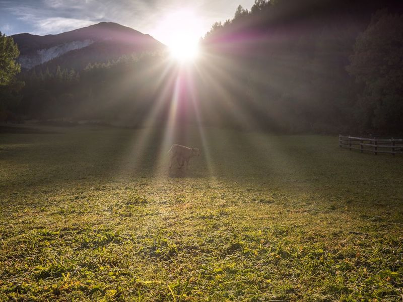 Good morning Autumn Val Müstair Sunbeam Sunlight Beauty In Nature Lens Flare Plant Sun Nature Sky Landscape No People Outdoors Environment Growth Idyllic Tranquility Scenics - Nature Land Tranquil Scene Grass Field A New Beginning