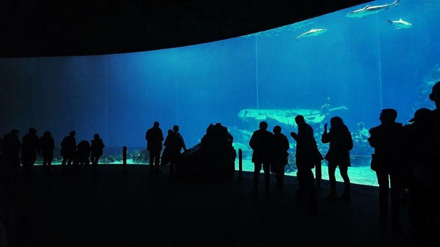 Silhouette people at aquarium