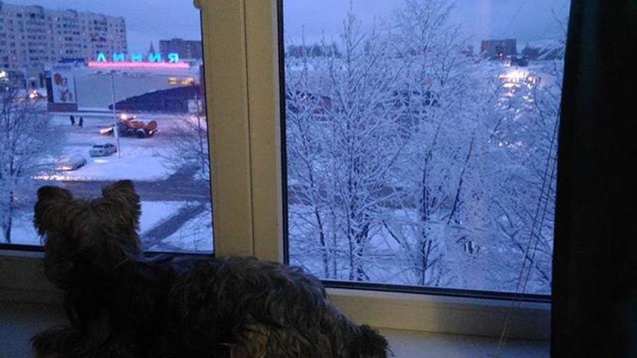 былазима собака зима видизокна взаимныелайки