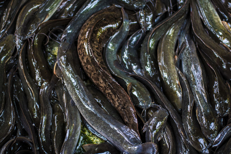 Catfish Backgrounds Full Frame No People Close-up Seafood Textured  Pattern Fish Food Indoors  Animal Food And Drink Nature Freshness Vertebrate Wellbeing Retail  Healthy Eating Day Consumerism