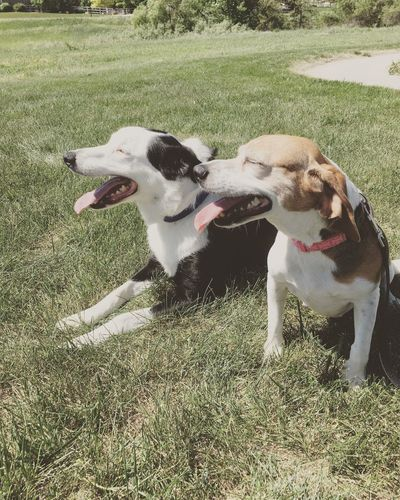 Coloradogram Colorado Outdoors Dog Mouth Open Grass Pets Animal Themes Togetherness Panting Dogs Dogs Of EyeEm Dogslife Happy Happyday Pets Of Eyeem