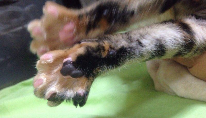 肉球 Pet Photography  Cute Pets Playing With The Animals Cat Lovers Cat Today's Hot Look