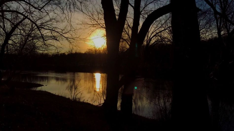 Silhouette Reflection Tree Water Lake Nature Scenics Beauty In Nature Tranquil Scene Tranquility Sunset Idyllic Bare Tree No People Sky Forest Outdoors Branch