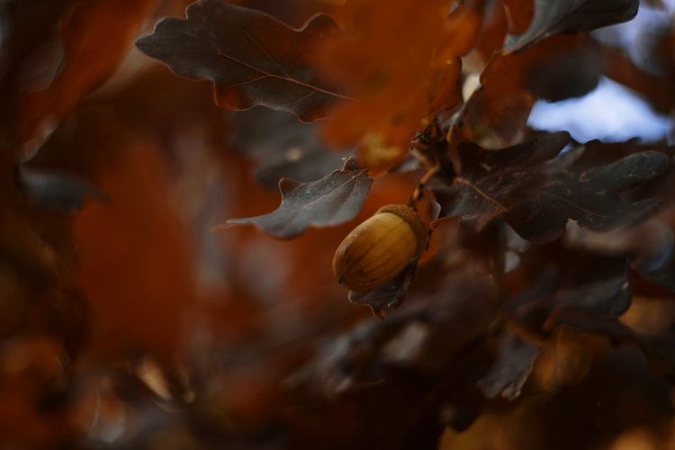 Tree Nature Autumn Autumn🍁🍁🍁 Autumn colors Golden Oak Leaf Leaves_collection Leaves Oak Tree Helios Helios44m Photo Flora Beauty In Nature Great Akcent Nobody Backgrounds Outdoors Forest Poland Atmosphere UnderSea Sea Life Underwater Close-up Coral Ocean Floor