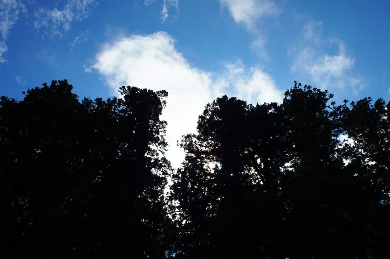 杉並木街道 日光 Nikko