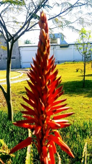 Aloe Bare Tree Beauty In Nature Branch Close-up Day Field Flower Freshness Grass Growth Nature No People Outdoors Plant Sky Tranquility Tree